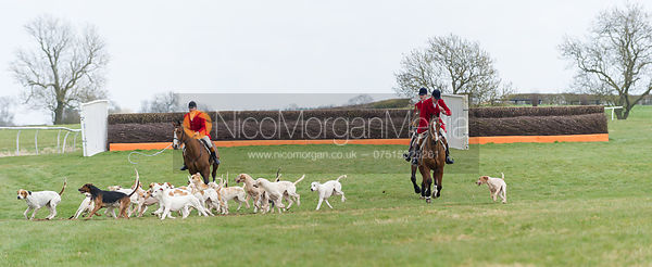Peter Collins parades the Quorn Hounds - The Quorn at Garthorpe 21st April 2013.