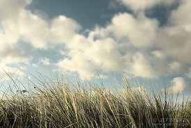 Grass and white clouds