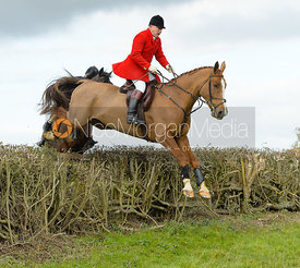 James Mossman jumping a hedge near Gartree Covert