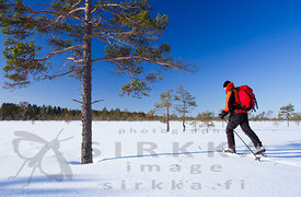 Skiing on the Kauhaneva Mire