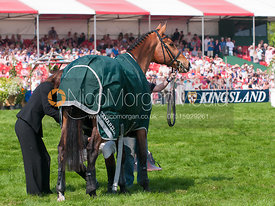 Tamarillo is retired at Badminton Horse Trials 2011