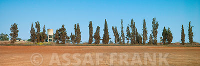 Agricultural Land and Row of Trees, Moshav Beit Hanan, Israel