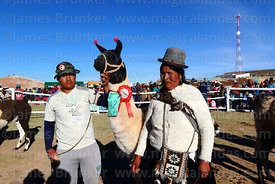 Community leader and owner pose with a winning llama during competition, Curahuara de Carangas, Bolivia