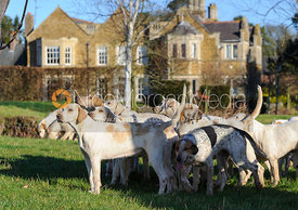 Cottesmore hounds at the meet in front of Burrough House