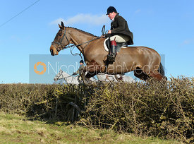 jumping a hedge near Knossington Spinney - The Cottesmore at Furze Hill.