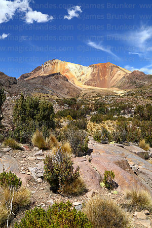 Puna steppe vegetation on hillside below Tunupa volcano, Oruro Department, Bolivia