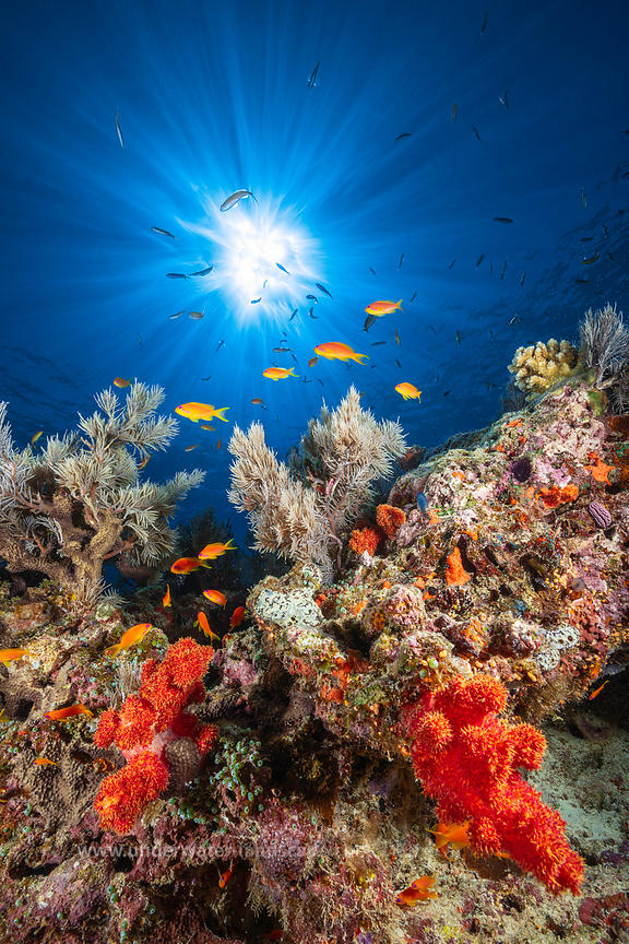 Mayotte: underwater Underwater Photographys of Mayotte