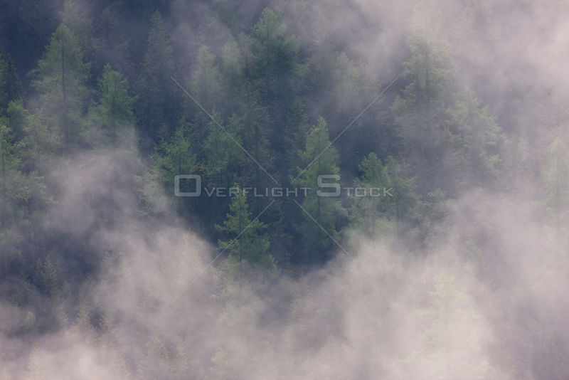 Clouds above old Norway spruce (Picea abies) and Larch (Larix decidua) forest, High Tatras, Carpathian Mountains, Slovakia, June 2009