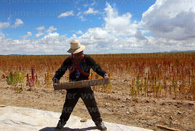 Aymara man wearing traditional dress separating quinoa grains from chaff using a sieve, Oruro Department, Bolivia