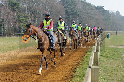 Racehorse training Equestrian Stock Images