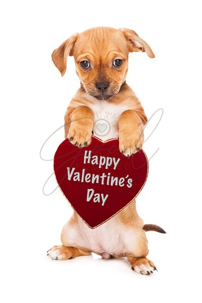 Puppy Holding Valentine's Day Heart