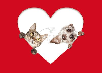 Cute Cat and Dog Peeking Out Of Cutout Heart
