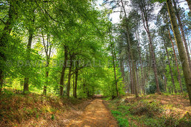 Kings Gate in Summer, Delamere Forest, Kelsall, Cheshire