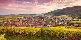 Panoramic of vineyards in autumn, Riquewihr, Alsace, France