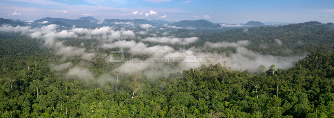 Low cloud hanging over lowland rainforest. Danum Valley, Sabah, Borneo.