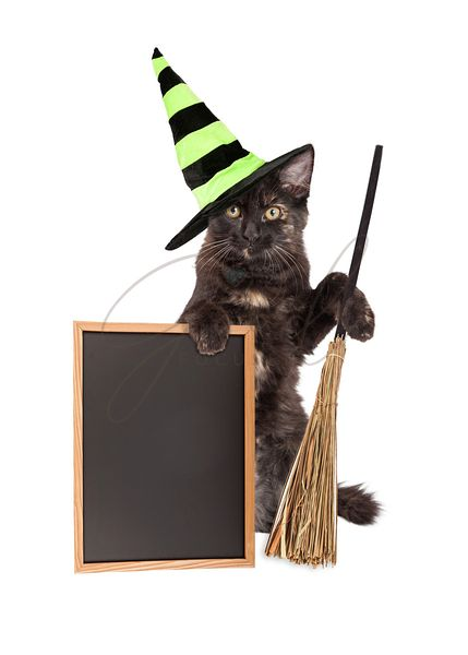 Halloween Witch Cat With Blank Chalkboard