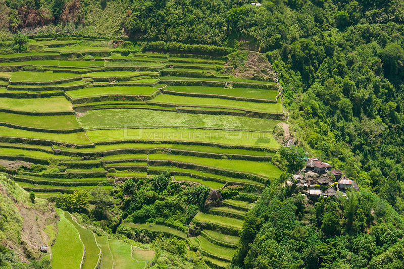 Aerial view of village and rice (Oryza sp) paddy fields growing on the Banaue Rice Terraces, Philippines.  UNESCO World Heritage Site 2008