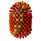 Influenza virus (flu) #20