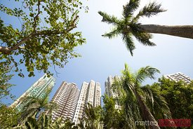 Palm trees and buildings in Aberdeen bay, Hong Kong