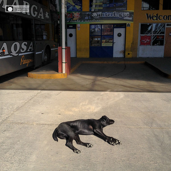 Dog fallen asleep at the bus terminal