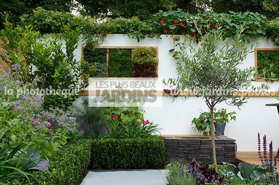 Allotment, Buxus, garden designer, Mini potager, Mini Vegetable garden, Olive tree, Small garden, Tropaeolum majus, Urban garden, Vegetable patch, Vegetable plot, Common Box, Foliage wall, Green wall, Vegetation wall, Wall decoration