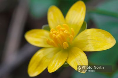 Yellow and Green Wild Flowers Gallery photos