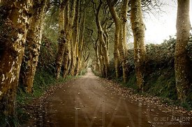 Long road with tree canopy