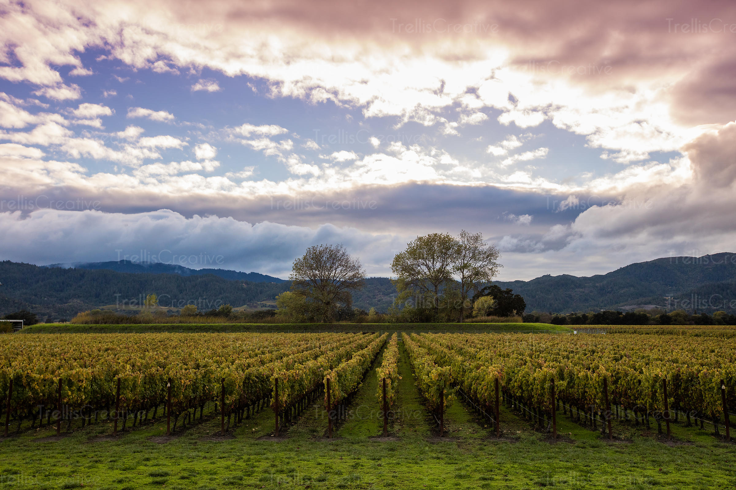 Stunning view of vineyard landscape against a stormy sky