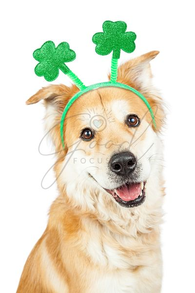 Happy Dog St Patricks Day Clover Headband