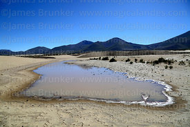 Seasonal lagoon in sand dunes near Copacabana, Cordillera de Sama Biological Reserve, Bolivia