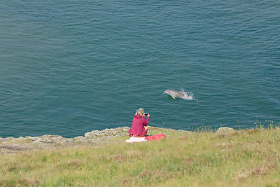 Dolphin watching, Mwnt