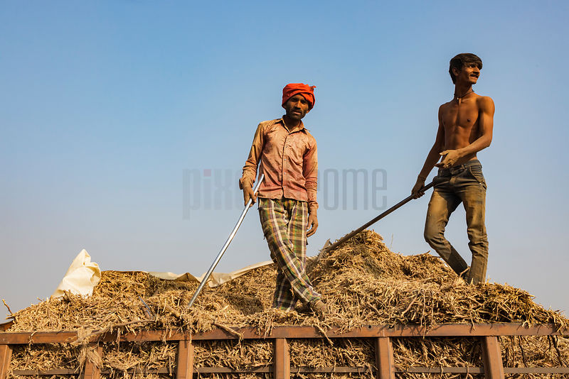 Brick Workers Loading Chipped Wood into Kilns for Firing Bricks
