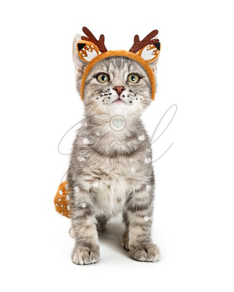 Cute Kitten Wearing Deer Halloween Costume