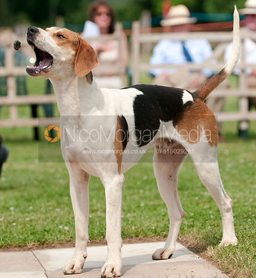 Blaston Hound Show photos