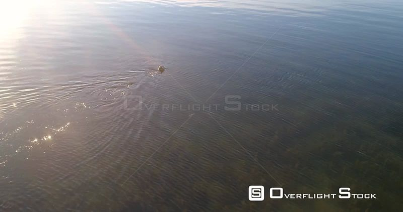 Diver, aerial view around a spearfisher, at the clear, shallow and low waters of baltic sea, on a sunny summer evening sunset, in Hanko, Finland