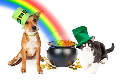 Dog and Cat With Pot of Gold and Rainbow