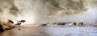 Great Wldebeest Migration Website Banner