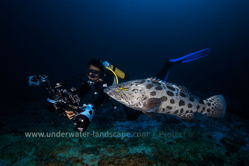 Diver and Potato grouper
