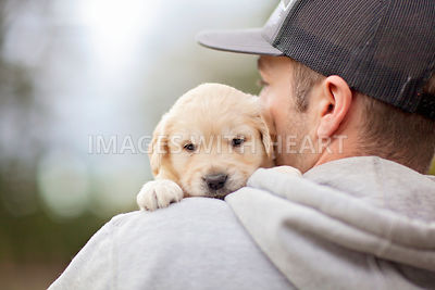 Golden Retriever puppy close up over shoulder
