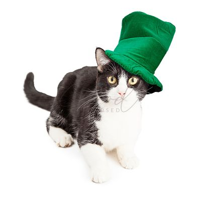 Cat Wearing St Patricks Day Hat