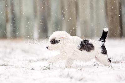 Black and white puppy in snowy yard