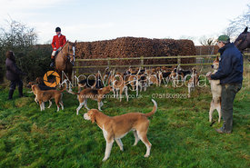 Huntsman John Holliday and the Belvoir hounds at Waltham House.