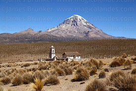 Ichu grass (Festuca orthophylla), church at Cotasaya and Sajama volcano, Sajama National Park, Bolivia