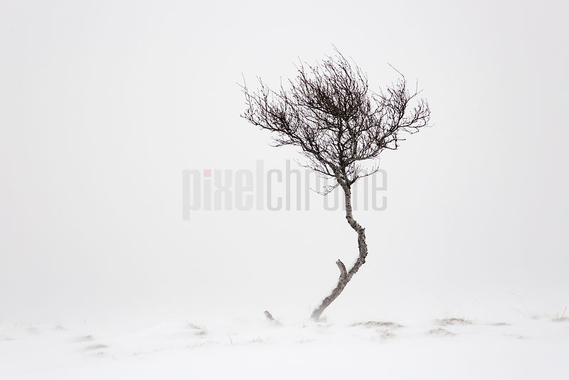 Lone Tree in a Snow-Covered Field