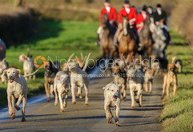 The Quorn Hunt hounds arrive at the meet