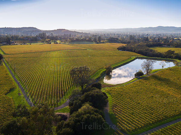 Aerial view of vineyard and a resevoir