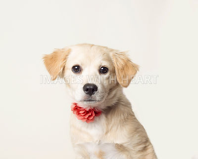 Puppy with a flower collar