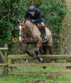 Roger Lee jumping a hunt jump near Knossington Spinney