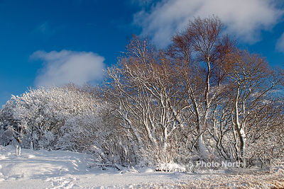 WINTER WOODLAND 01A - Snow-covered trees