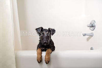 Puppy in the bath